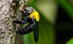 $135 for Eco-Friendly Hornets- and Wasp-Treatment...