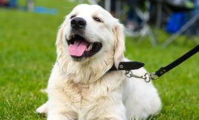 $535 for SteadyCare 1-Month Dog Walking Membership