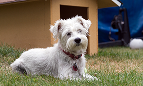 $200 for 3 Months of Pet Waste Removal Service