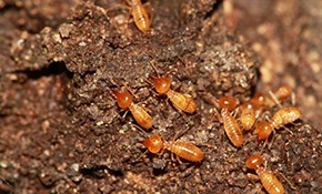 $189 for an Advance® Termite Treatment Package...