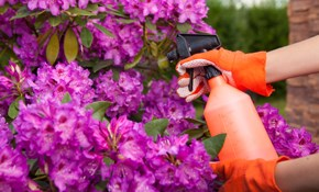 $199 for 4 Hours of Fall Yard Clean-Up