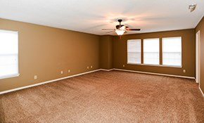 $275 for 1,000 Square Feet of Deep Carpet...