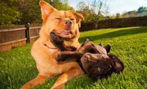 $63 for Two Nights of Dog Boarding Services