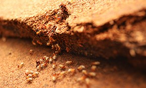 $45 for a Preventive Exterior Pest Treatment