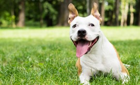 $75 for $100 Credit Toward Animal Training