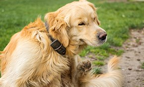 $90 for 3 Flea and Tick Applicaitons