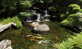 $75 for a Pond/Waterfall Consultation