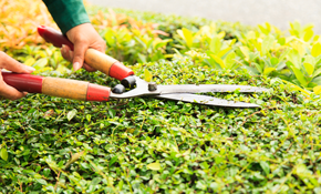 $89 for a Two-Hour Fall Yard Cleanup or Gutter...