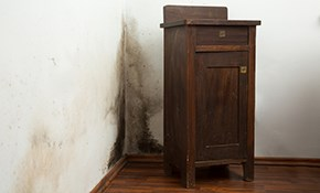 $100 for $200 Credit Toward Mold Remediation...