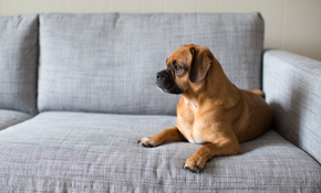 $179 for Organic Upholstery Cleaning of a...