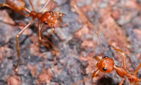 $496 for Year Round Ant Prevention Program...