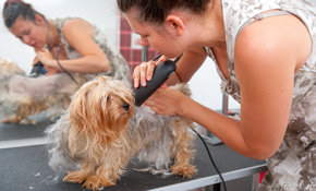 $40 for a Small Dog Grooming Package