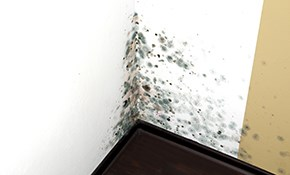 $900 for $1000 Credit Toward Mold Remediation...