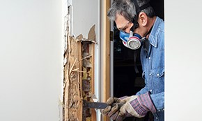 $295 for Termite Damage Repair Inspection/Consultation...