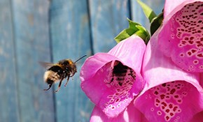 $225 for Bee Removal and Treatment