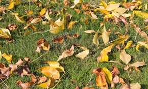 $250 for up to Five Yards of Leaf Removal