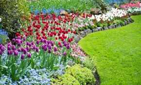 $750 for 3 Landscape Professionals for 8...