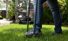 $225 for Lawn Aeration and Overseed