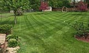 $299 for 7 Lawn Fertilizer and Weed Control...