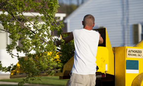 $999 for 3 Tree Service Professionals for...