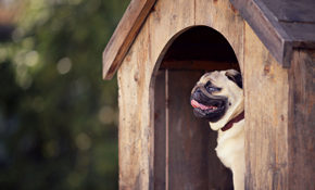 $104 for a 4-Night Dog Boarding Package