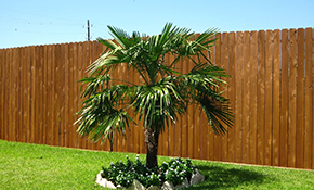 $1299 for a Cedar Privacy Fence (up to 50...
