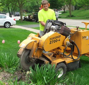 A tree service professional grinds out a stump after a tree has been cut down