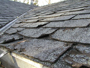 These shingles are curled and decayed from age.
